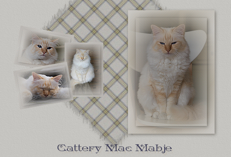 © Cattery Mac Mabje